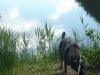 Hundeschule Wietze Bild22