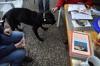 Erste Hilfe Kurs in der Hundeschule Celle