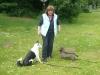Hundeschule Wietze Bild28