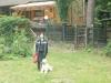 Hundeschule Wietze Bild3