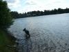 Hundeschule Wietze Bild17