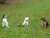 Hundeschule-Wietze2