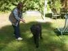 Hundeschule Wietze Bild12
