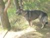 Hundeschule Wietze Bild21