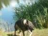 Hundeschule Wietze Bild23