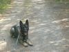 Hundeschule Wietze Bild24