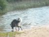 Hundeschule Wietze Bild25