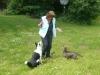 Hundeschule Wietze Bild31