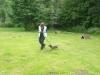 Hundeschule Wietze Bild38