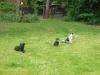 Hundeschule Wietze Bild41
