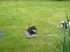 Hundeschule Wietze Bild44