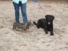 Hundeschule Wietze Bild49