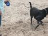 Hundeschule Wietze Bild61