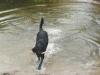Hundeschule Wietze Bild63