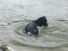 Hundeschule Wietze Bild68