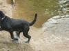 Hundeschule Wietze Bild73