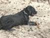 Hundeschule Wietze Bild74