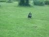 Hundeschule Wietze Bild77