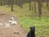 Hundeschule Wietze Bild5